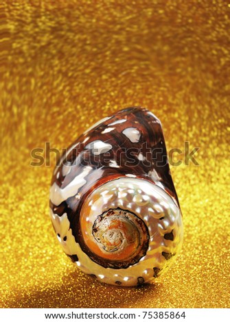 Nautilus Shell with room at top for your type.