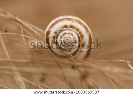 Nautiluses in nature on plants, flowers, in fields. Spiral. A twist of life. Sink. Beauty forms in nature. #1083369587