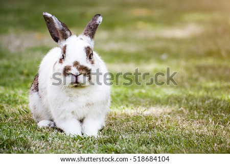 ND rabbit or cute bunny on green grass.