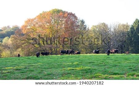 neanderthal landscape in Mettmann in the Eifel germany Stock photo ©