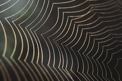 Neat spider web in nature