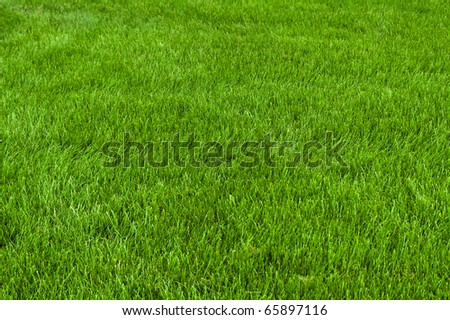 Neatly cut grass. Full frame shot with wide depth of field. - stock photo