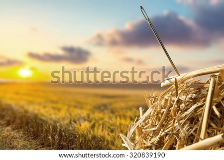 Needle in a Haystack. Stock photo ©