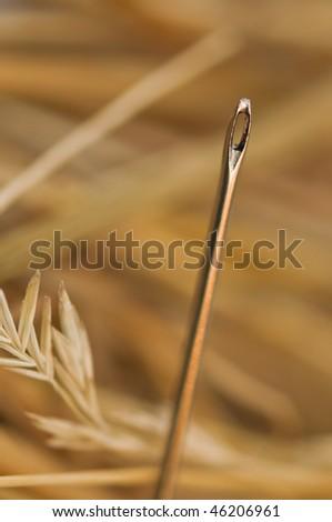 needle in hay stack closeup - stock photo