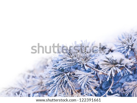 Needles in ice with white space