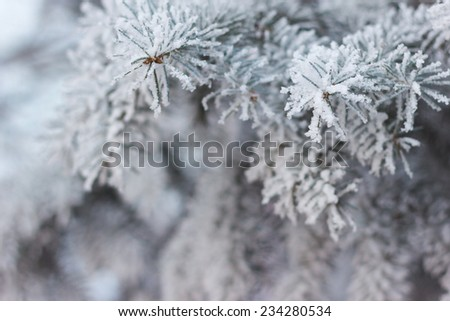 Needles in the frost #234280534