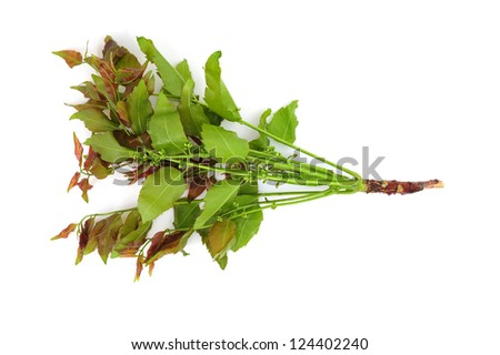 Neem leaves and flowers