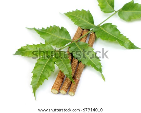 Neem leaves and twigs