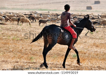 NEGEV, ISRAEL - JULY 13:Young Bedouin shepherd rides his brown horse while gathering his sheep herd on July 13 2011.The nomadic Arabs live by rearing livestock in the deserts of southern Israel.