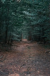 Neglected path in the forest at dusk. Vertical orientation