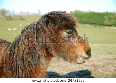Neglected unkempt pony