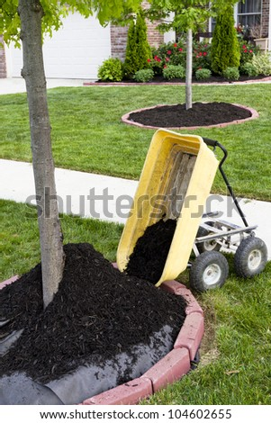 Neighborhood beautification starts with a mulching operation around the tree trunks.