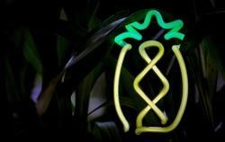Neon Cactus Light Photography Closeup With Grass Plant Background Succulent Desert Tropical Vibes Logo Backdrop Design