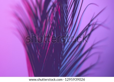Neon purple palm leaves. Violet gradient background. Selective focus art concept.