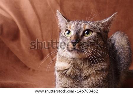 nervous cat studio shoot