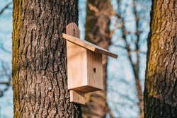 Nest box on a tree. New nestbox. Wooden birdhouse. Birdbox. bird box in the park.