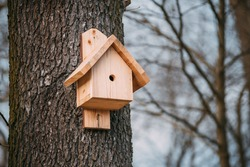 Nest box on a tree, New nestbox. Wooden birdhouse, Birdbox, bird box in the park, Spring is comming, Bird migration, Season