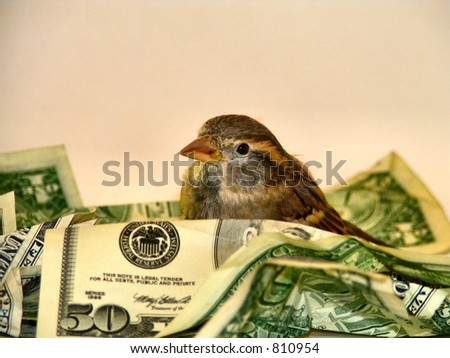 nest egg - stock photo