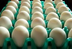 Nest Egg in Fram