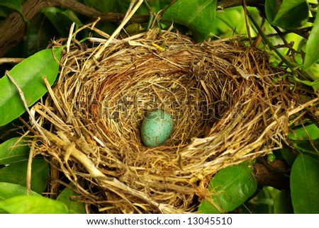 Nest hidden in the tree with a blue egg. - stock photo