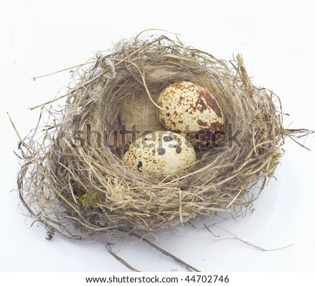 Nest in which two eggs of female quail on white background
