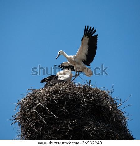 Nest iwth White Storks