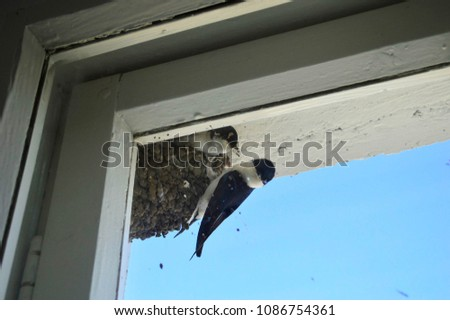 nest of birds near the window #1086754361