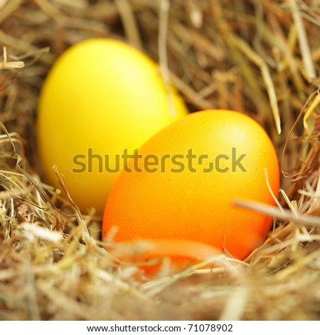 Nest with easter eggs. Shallow DOF!!!