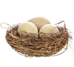 Nest with egg on a white background