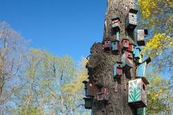 Nesting-boxes on the tree in the park of Verkiai palace, Vilnius, Lithuania