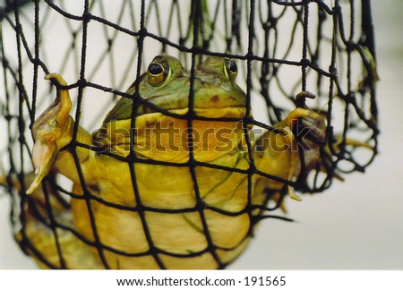 Net Frog - stock photo