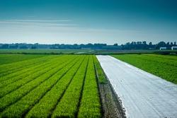 Netherlands,South Holland,Europe, a long green grass