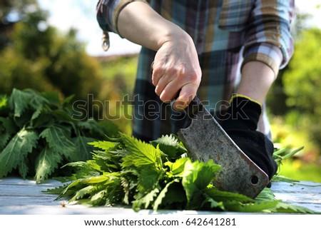 Nettle. Woman chopping nettle leaves.    #642641281