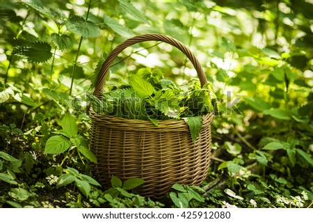 nettles in a wicker basket in the forest. Natural back light. Bokeh. Soft background.