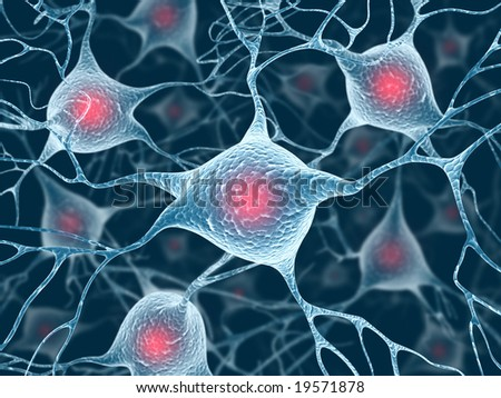 Neurons and Nucleus (Structure of the brain)
