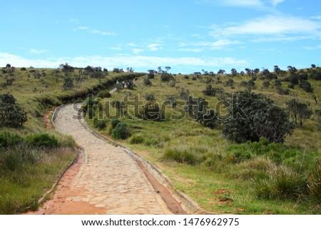 Never ending road in the World'd End trail, Horton Plains, Sri Lanka #1476962975
