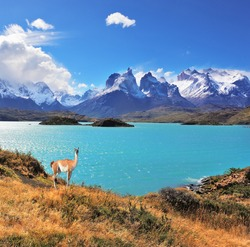 Neverland Patagonia. Emerald Lake Pehoe water on the hill stands a graceful guanaco. Away in the clouds - the cliffs of Los Kuernos