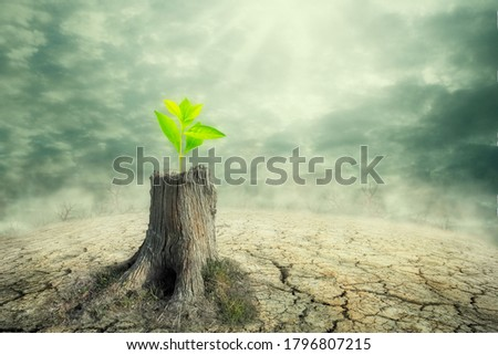 New beginning and the cycle of life concept of hope and recovery as a sapling plant growing from a dead tree as a psychology of a start or young business determination. new business or life metaphor  Foto stock ©