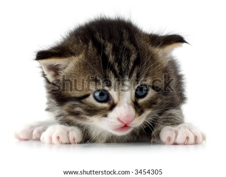 New born kitten on white close up