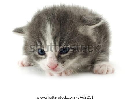 New born kitten on white close up - stock photo