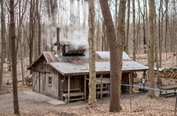 New Carlisle IN USA, March 17 2019;a sugar shack spews out stream as inside, people boil maple tree sap and turn it into maple syrup and maple sugar