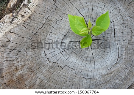 New Development And Renewal As A Business Concept Of Emerging Leadership Success As An Old Cut Down Tree And A Strong Seedling Growing In The Center Trunk As A Concept Of Support Building A Future.