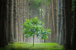 New development and renewal as a business concept of emerging leadership success as New tree that are growing among large trees as a concept of support building a future.