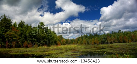 New England marsh & lily pond,		Long Pond,	Mount Desert Island, Acadia National park, Maine, New England