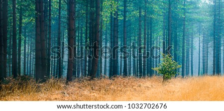 New Forest Pine Trees #1032702676