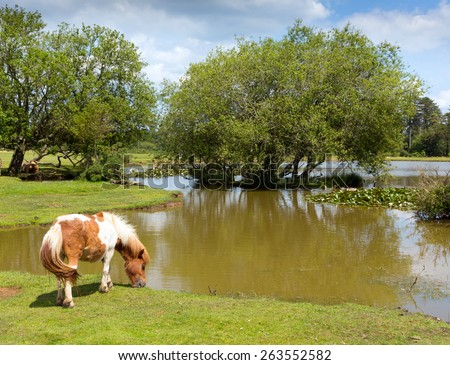 New Forest pony by a lake on a sunny summer day in Hampshire England UK on a summer day