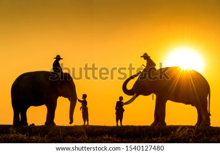 New generation mahout. Two boy and Two mahout and two elephant with sunset light as a backdrop. The activities Krapho, Tha Tum District, Surin, Thailand. #1540127480