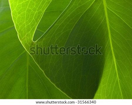 New green plant leaves