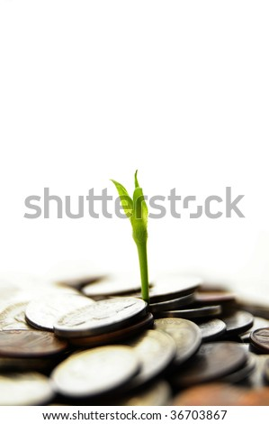 new green plant shoot sprouting from coins