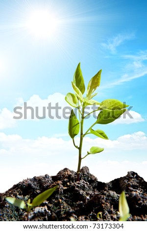 New green plant with sun ray